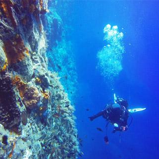 Diving tropea diving - Dive per sempre ...
